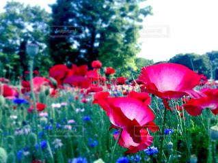 花の写真・画像素材[511808]