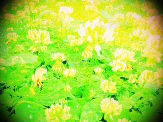 緑の写真・画像素材[519887]