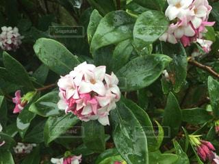 近くの花のアップ - No.1061968