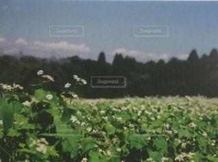 背景の木と大規模なグリーン フィールドの写真・画像素材[1065167]