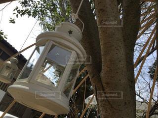 近くの木のアップの写真・画像素材[1090630]