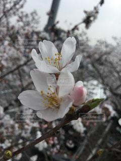 植物の白い花 - No.1090631