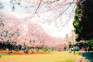 千葉公園 - No.1101030
