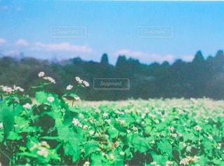 背景の木と大規模なグリーン フィールドの写真・画像素材[1112539]