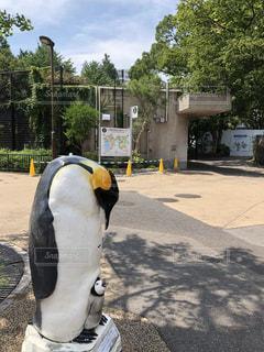 通りにいるペンギンの写真・画像素材[1362532]