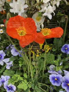 花の写真・画像素材[2065940]