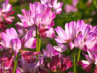 紫色の花束のクローズアップの写真・画像素材[3171936]