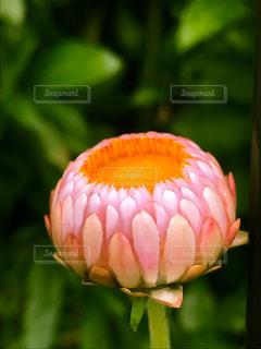 花のクローズアップの写真・画像素材[3321923]