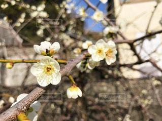 花の写真・画像素材[401054]