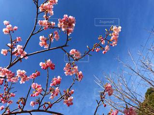 花の写真・画像素材[401055]