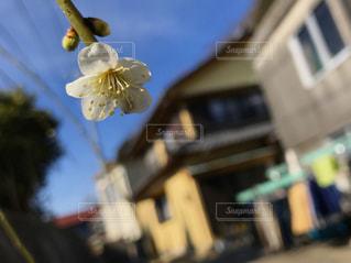 花の写真・画像素材[401056]