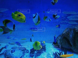 魚の写真・画像素材[401096]