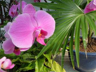 花の写真・画像素材[401101]