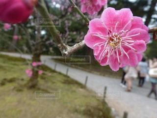 花の写真・画像素材[401111]