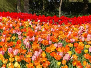 花の写真・画像素材[435294]