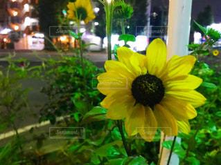 花の写真・画像素材[689730]