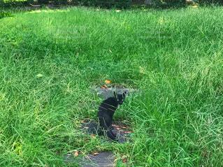 黒猫の写真・画像素材[931213]