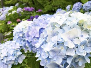 近くの花のアップの写真・画像素材[1237206]