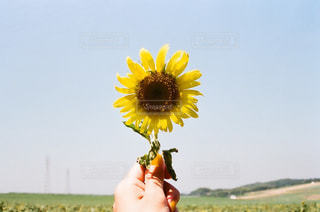 花を持っている人の写真・画像素材[1413077]