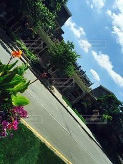 花の写真・画像素材[20785]