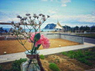 風景,インテリア,花,植物,海辺