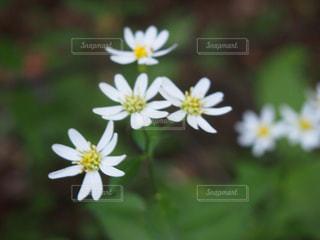 自然の写真・画像素材[401390]