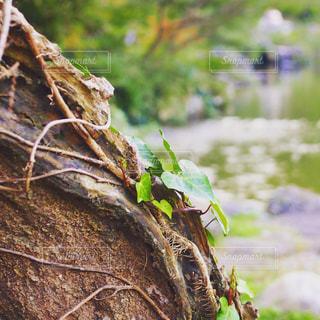 自然,木,緑,癒し,生命