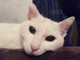 猫の写真・画像素材[401414]