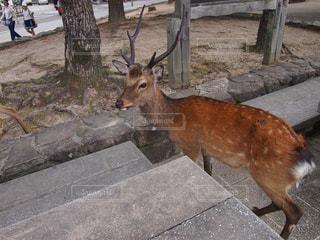 動物の写真・画像素材[401419]