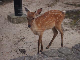 動物の写真・画像素材[401421]