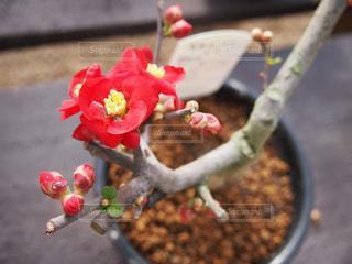 花の写真・画像素材[401439]