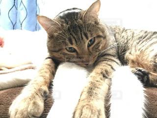 猫の写真・画像素材[401459]