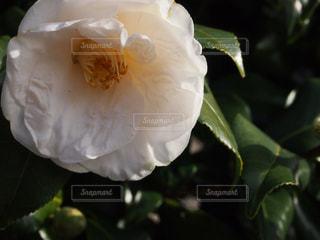 自然の写真・画像素材[401511]
