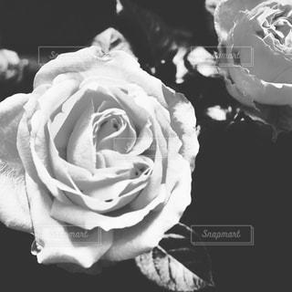 花の写真・画像素材[401726]