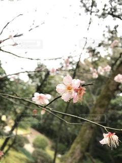 自然の写真・画像素材[401882]
