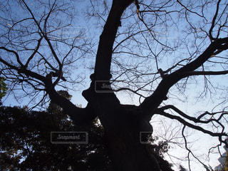 自然の写真・画像素材[403266]