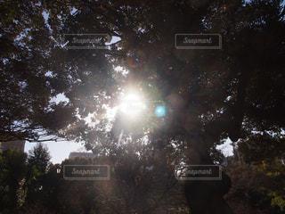 自然の写真・画像素材[403269]