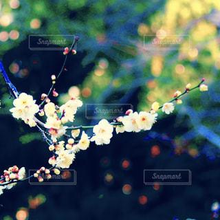 自然の写真・画像素材[408363]