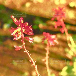 自然の写真・画像素材[408366]