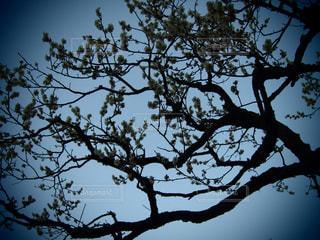 自然の写真・画像素材[408382]