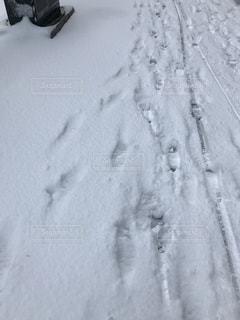 雪 - No.401370