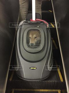 犬 - No.405425