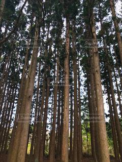 木の写真・画像素材[464889]