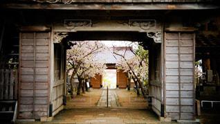 桜 - No.475764