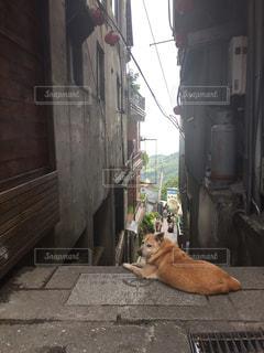 No.404961 犬