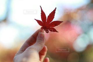 秋の写真・画像素材[403042]