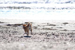 犬,海,砂浜