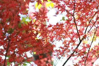 秋の写真・画像素材[403244]