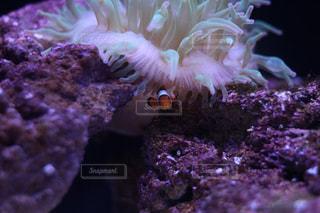 魚の写真・画像素材[689545]
