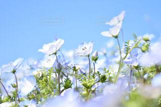花の写真・画像素材[448530]